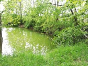 Ein kleiner grüner See im Wald, der zum Waldbaden einlädt.