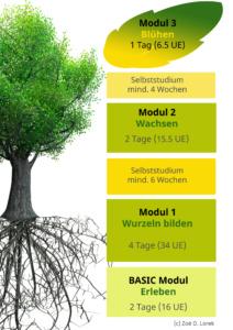 Die Übersicht der Ausbildung, ein grüner Baum mit Wurzeln. Die Elemente als Blöcke: Basic 2 Tage Erleben, Modul 1 Wurzeln bilden 4 Tage, Selbststudium 6 Wochen, Modul 2 Wachsen 2 Tage, Selbststudium 4 Wochen, Modul 3 Blühen 1 Tag.