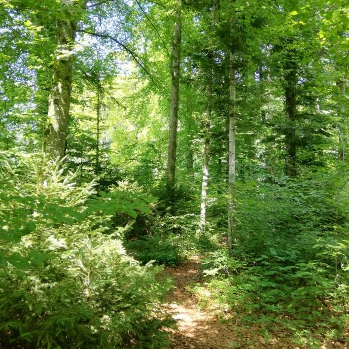 Ein Weg mitten durch den Sommerwald, hellgrüne Blätter, blauer Himmel ist sichtbar
